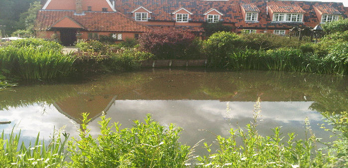 newly cleared pond after used of weed cutter